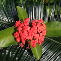 Hamilton Island, Whitsundays, Queensland. Hamilton Island, Plants, Beautiful, Plant, Planets