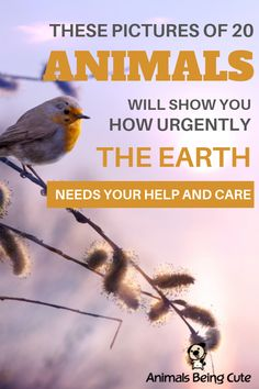 These pictures of 20 animals will show you how urgently the Earth needs your help and care Inspirational Animal Quotes, Baby Sea Lion, Slow Loris, Saltwater Crocodile, Baby Orangutan, Tiny Puppies, Interesting Animals, Animal Facts, Find Pets