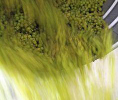 Die Kunst des Kellermeisters: Was es braucht, um aus Traubensaft Wein zu machen.