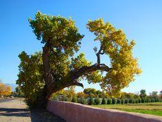 Autumn elegance - Corrales, New Mexico