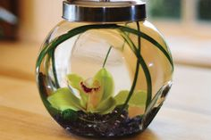 FISH BOWL (A whimsical interpretation)