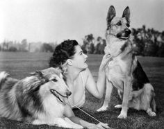 0 Yvonne De Carlo with her dogs
