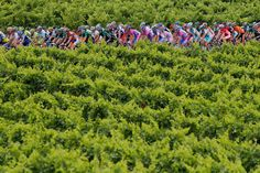 Tour de France 2012 - The peloton pedals through vineyards during the 13th stage on July 14, 2012.