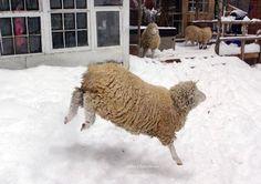 Home - Sweet Pea & Friends Farm Animals, Sheep, Sweet Home, House Beautiful