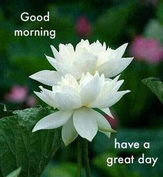Good Morning Roses, Good Morning Images Flowers, Morning Pictures, Morning Wish, Good Morning Messages, Good Morning Greetings, Morning Quotes, Good Night Sweet Dreams, Flowers For You