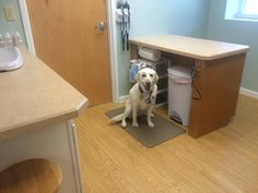 At Stow Kent Animal Hospital Inc., Portage Animal Clinic and Stow Falls Pet Clinic Inc. Pet Clinic, Exotic Pets, Dog Friends, Your Pet, Lab, Room, Animals, Bedroom, Animales