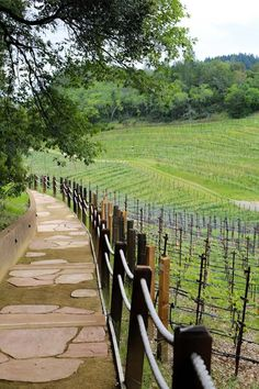 St. Helena Wineries | The Best Itinerary Travel Pictures, Travel Photos, Wine Tasting Experience, Travel Sights, Napa Valley Wine, Weekend Breaks, Space Travel, Best Vacations, Wine Country