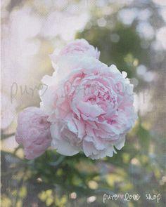 Eternal Spring  Fine Art Photography Pink Peony by PureLoveShop, $20.00