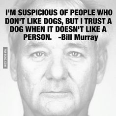 🙌🏼🙌🏼🐶Great words from the very wise dog dad Bill Murray 🐶🙌🏼🙌🏼 Quotable Quotes, Wisdom Quotes, Quotes To Live By, Life Quotes, Dog Quotes, Funny Quotes, Funny Memes, Great Quotes, Inspirational Quotes