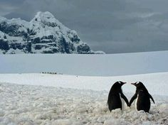 View National Geographic reader pics pictures on Yahoo Finance Canada . See National Geographic reader pics photos and find more pictures in our photo galleries. Penguin Pictures, Funny Animal Pictures, Funny Animals, Cute Animals, Funny Photos, Share Photos, Random Pictures, Funny Images, Penguin Love