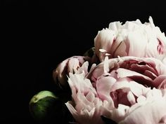 Peony 1 Photographic print Available as paper print on Hahnemuhle Photo Rag Paper. All paper images are printed with a white border and signed and numbered b