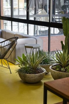 Image 46 of 53 from gallery of Estúdio Pretto / Arquitetura Nacional. Photograph by Marcelo Donadussi Concrete Slab, Industrial Office, Reception Areas, Lounge Areas, Floor Design, Indoor Plants, Living Spaces, Flooring, Photograph