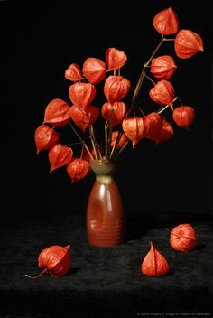Chinese Lantern Flowers - had these at my last house, wish I'd have taken some to replant :( Flower Vases, Flower Pots, Chinese Lanterns Plant, Dessert Decoration, Dessert Ideas, Red Lantern, Autumn Scenery, Still Life Art, Container Flowers
