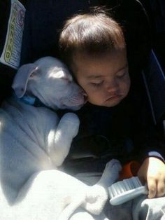 aww a little baby and a puppy pitbull , they will be the best of friends forever....
