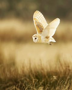 Beautiful nature & wildlife photography by Steven Ward