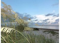 Sullivan's Island, SC - picture taken by RBH South Carolina Real Estate, Charleston South Carolina, Sea Dream, Sullivans Island, Beach Scenes, Dreams, Mountains, Baby, Pictures