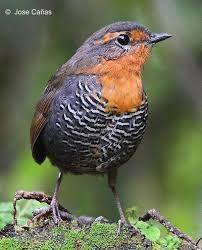 Resultado de imagen para imagenes de aves del sur de chile