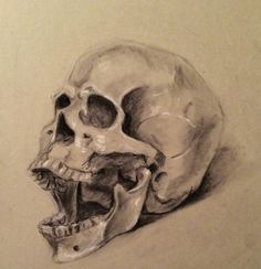 Skull, charcoal and chalk