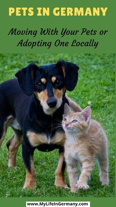 Pet Shop, Top Dog Breeds, Can Dogs Eat, Pet Care Tips, Cat Food, Pets, Dog Training, Training Collar, Training Classes