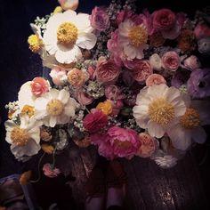 ❈ Fleurs Foncées ❈ dark art photography flowers botanical prints -Amy Merrick