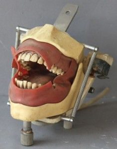 Authentic vintage dental school teaching device.