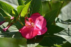 ATTENTION DERNIER JOUR Livraison OFFERTE et GARANTIE pour Noel Avec votre code BIENTOTNOEL http://www.artifleurs-fleurs-artificielles.com BROCHE ou PINCE CHEVEUX ORCHIDEE fuchsia fleur artificielle