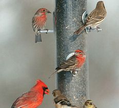 Bird-feeding Basics              Attract birds to your yard with the right feeder and seeds.