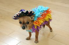 DIY Dog Pinata Costume - Fringed strips of crepe paper hot glued to a dog sweater.