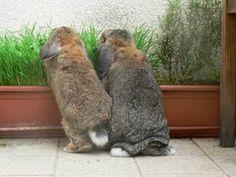 Divertir son lapin et enrichir l'environnement : jeux et jouets pour lapins - La dure vie du lapin urbain
