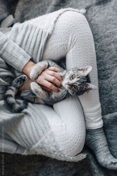 535. cat cuddle Adorable Animals Pets cats cute animals deer dogs lions squirrels tigers wolves pets adorable nature inspiration horses baby adorable amazing awesome nice colorful beauty sun Friends love happy beautiful summer fun sea beach travel adventure