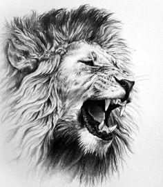 Awesome drawings of lions roaring lion pencil drawing on tattoos татуировки, эски Lion Chest Tattoo, Lion Head Tattoos, Mens Lion Tattoo, Hand Tattoos, Tattoo Women, Lion Tattoo Design, Tattoo Design Drawings, Cool Drawings, Tattoo Designs