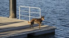 Water Dogs ~ on the dock of a bay