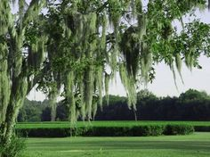 Thrival living is about being connected. We're connecting our community of loyalists for some good tips for seeing a city in a different way. Check out this post: Charleston Tea Planation https://thrival.hyfnrsx1.com/share_post.php?v=5_id=305