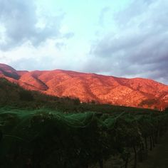Vineyards in southern Arizona where we grow our amazing fruit for our wine.