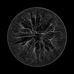 gravity43-k2 (doc_tor_matt) Tags: processingorg algorithmic generative