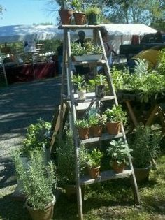 Arrange your potted herbs on a ladder!