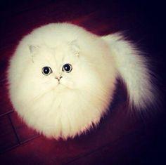 OHH | Cutest Paw