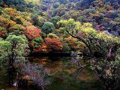 청송 주산지 Korea, River, Outdoor, Beauty, Paisajes, South Korea, Outdoors, Outdoor Games, The Great Outdoors