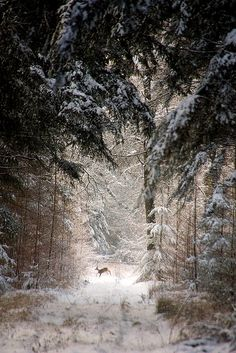 forrest deer My first Winter in Montana.many long walks in woods which looked exactly like this.this scene would be in the Fall before the deep Winter snows precenting such walks without snow shoes.so beautiful. Winter Szenen, Winter Magic, Winter Time, Winter Christmas, Deep Winter, Christmas Decor, Snow Scenes, All Nature, Winter Beauty