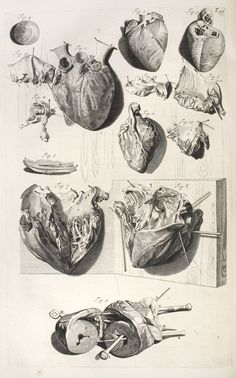 my Anatomy blog : Photo