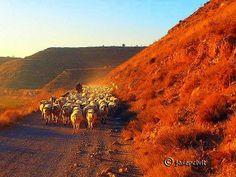 Caminar per #laSegarra a la posta, trobar un pastor amb el ramat i fer-hi una xerrada, no té preu. @Ara Lleida @Catalunya Experience @Viatge per Catalunya @Brots Cultura @Margeners de Guissona