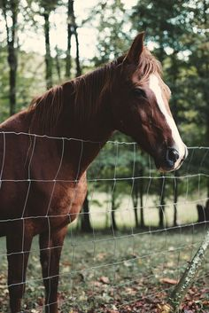 What is your favorite animal?! #horse #nature #love