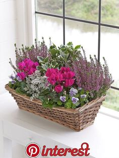 Legende Autumn Window Box Interflora Legende Autumn Window Box Interflora / The post Legende Autumn Window Box Interflora appeared first on Pflanzen ideen. Container Flowers, Container Plants, Container Gardening, Succulent Containers, Vegetable Gardening, Organic Gardening, Gardening Tips, Winter Window Boxes, Fall Planters
