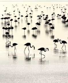 Flamingoscape - Flamingos in their world by Kiran Sham on 500px