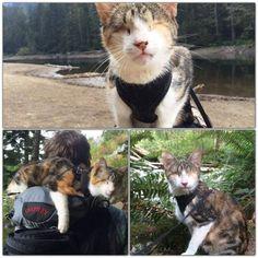 Honey Bee - blind cat - traveler