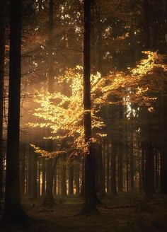 A brief strike of light transforms a dark forest scene into a magical play of light. Shot in the woods in Köln (Cologne), Germany