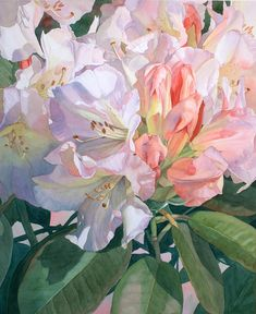 Lovely rhododendron watercolor! Translucence Painting by Jan Lawnikanis