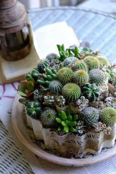 Suculentas y cactus - Growing Succulents, Succulents In Containers, Cacti And Succulents, Planting Succulents, Cactus Plants, Planting Flowers, Mini Cactus Garden, Succulent Gardening, Succulent Terrarium