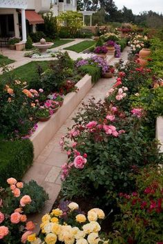 A beautiful rose garden with all colors of roses! http://flowersgifts.labellabaskets.com faragmoghaddassi@yahoo.com