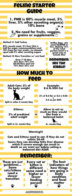Get The Scoop On The Basics Of Transition Your Cat Or Kittens To A Species Appropriate Raw Diet Www Thenutritioncode Info The Raw Diet Cat Nutrition Nutrition